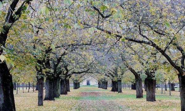 Obstgarten im Schwetzinger Schlossgarten im Herbst